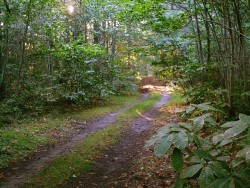 Forêt - chemin
