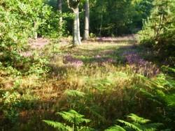 Forêt - sous bois